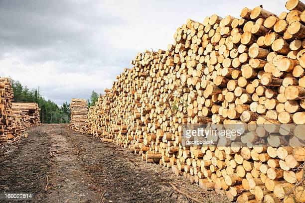 Cut Timber Stack
