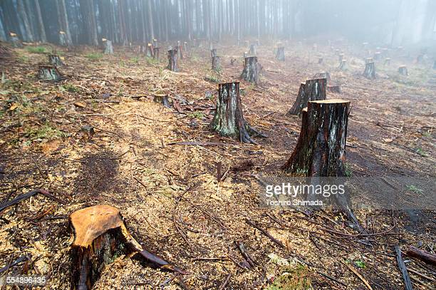 Cut trees in the forest