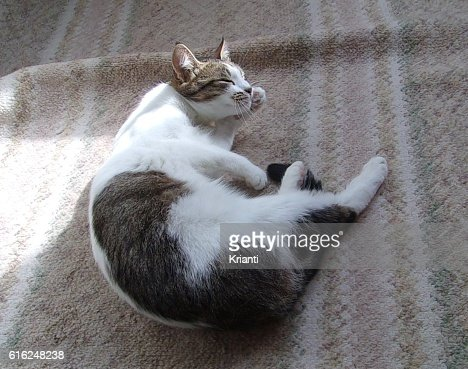 Cute and funny cat playing : Foto de stock