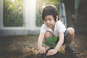 Cute Asian child planting young tree on the black soil