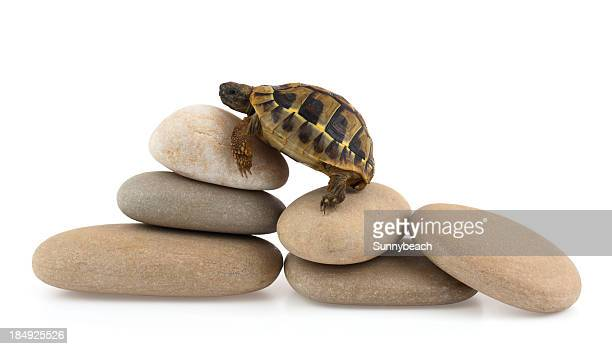 A cute baby turtle climbing on stones