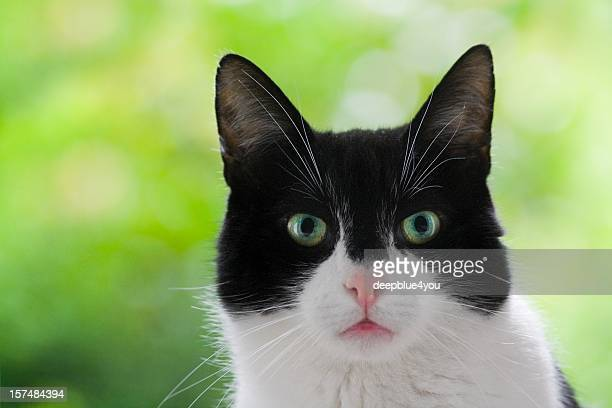 Cute black and white domestic cat head shot green background