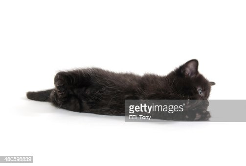 Cute black kitten : Stock Photo