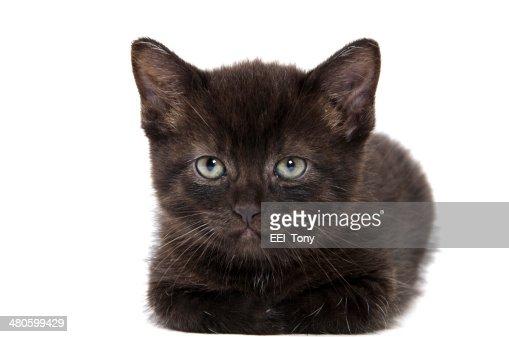 Cute black kitten : Stock Photo