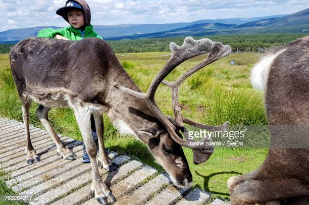 Cute Boy Touching Deer While Standing On Footpath