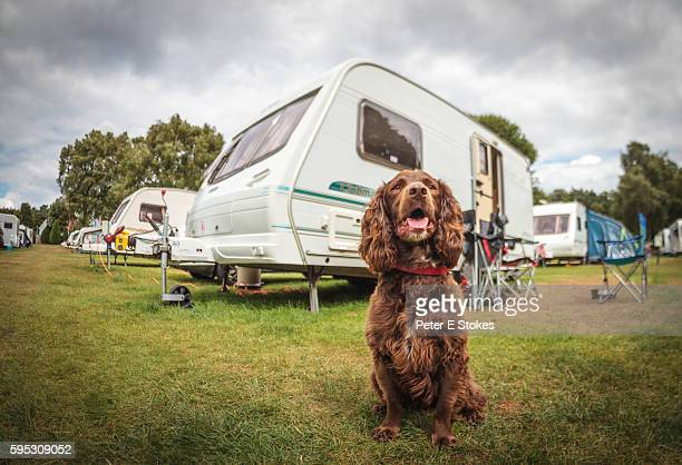 Cute brown dog sits in front of touring caravan on guard duty