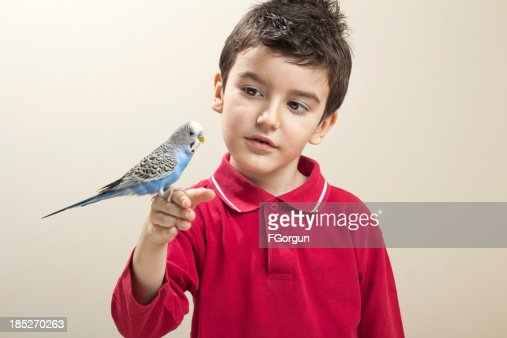 Cute budgies in the hands of a child