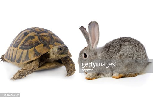 Cute Bunny and Turtle