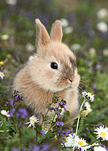 This is a beautiful rabbit bunny.