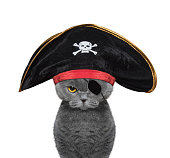 cute cat in a pirate costume -- isolated on white