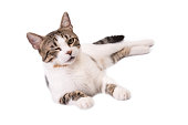 Cute Cat Lying on a White Background and Winking