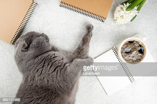 Cute cat lying on white wooden table with coffee cup, notebooks and flower hyacinth. Femininity background. Cozy weekend concept : Stock Photo
