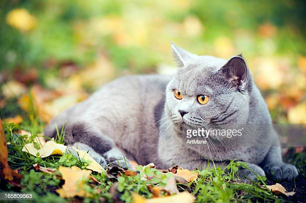 Cute cat oudoors