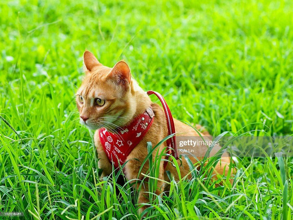 Cute cat : Stock Photo