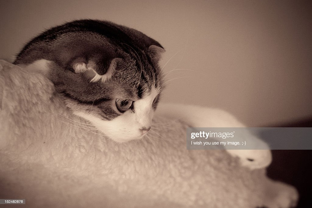 Cute cat : Stock Photo