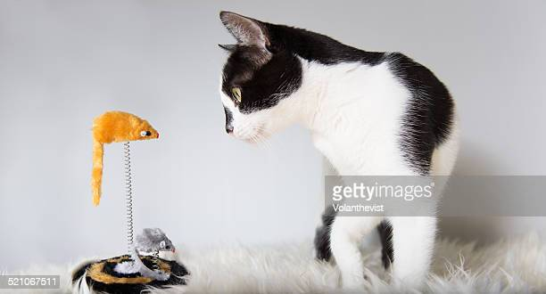 Cute cat playing at home with a mouse toy
