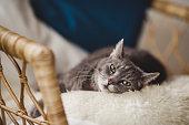 Cute cat relaxing in sofa