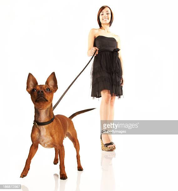Cute Chihuahua being Walked on Leash by Pretty Young Woman
