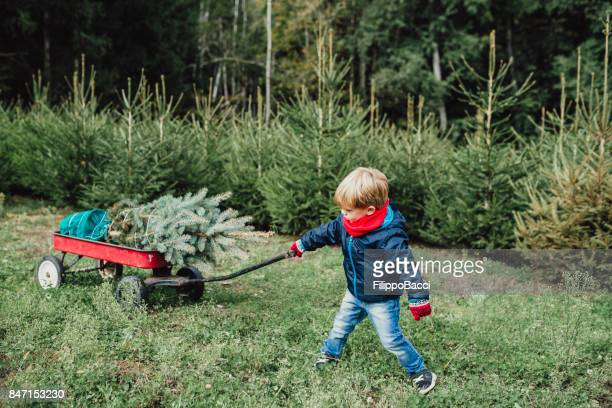 Cute child carrying a Christmas tree