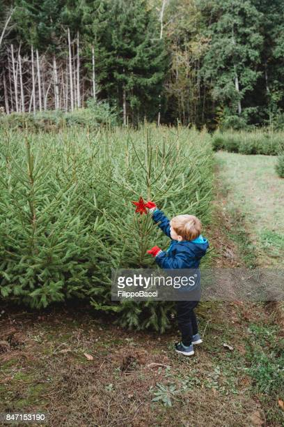 Cute child decorating a Christmas tree outdoor