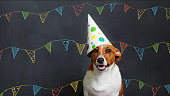 Cute dog in carnival party hat celebrating birthday on horizontal banner with space for text.