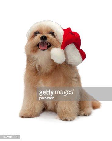 Cute Dog in Santa Hat : Stock Photo