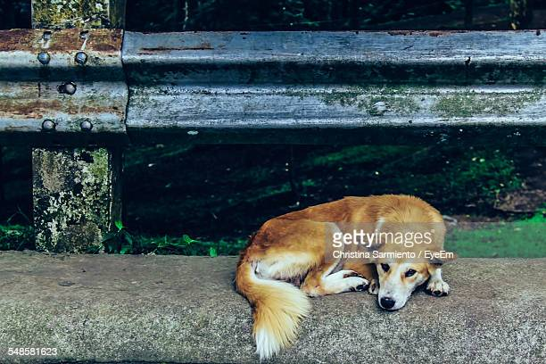 Cute Dog Lying On Roadside