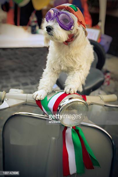 Cute dog on vintage scooter