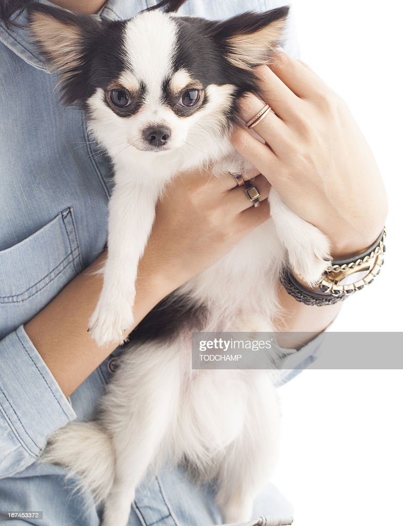 cute dog : Stock Photo