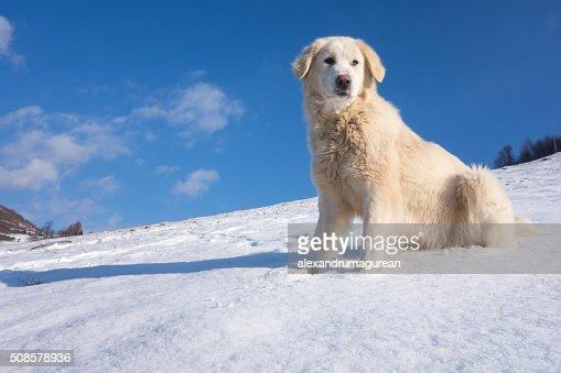 Cute Dog : Stockfoto