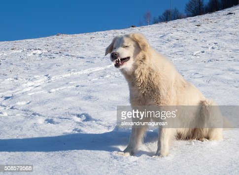 Cute Dog : Stock Photo