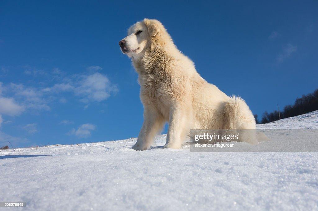 Cute Dog : Bildbanksbilder