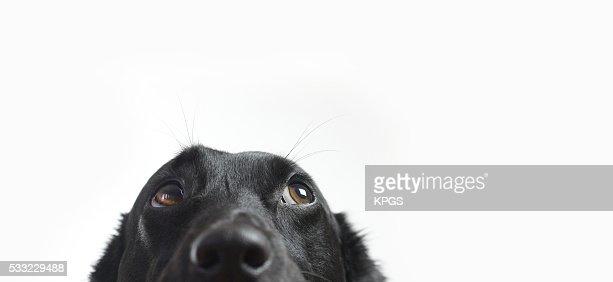 Engraçado Cão : Foto de stock