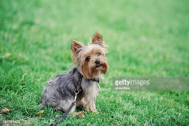 かわいい犬の芝生に座る