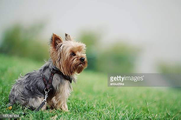 Cute dog sitting in the grass