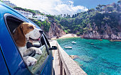 Cute dog travels in the blue car to the sea