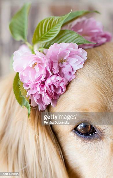 Cute dog wearing flowers