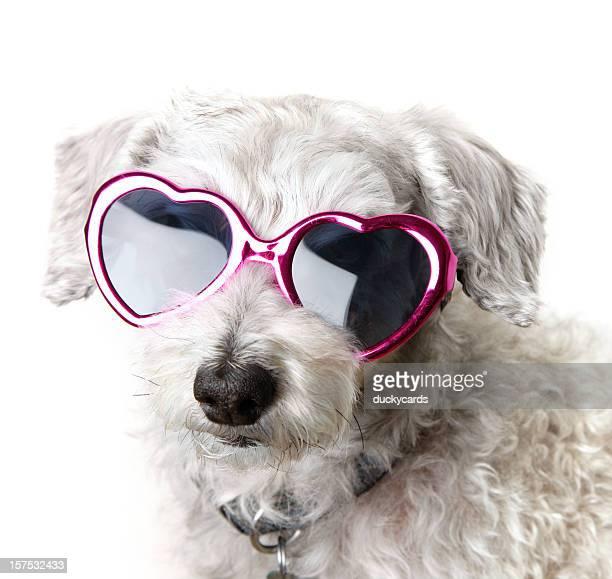 Süßer Hund mit Herz-Sonnenbrille