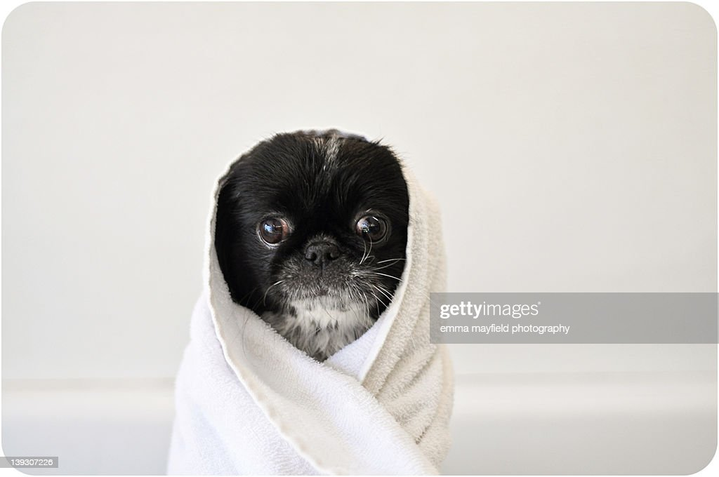 Cute dog wrapped : Stock Photo