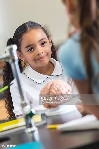 Mignon école élémentaire étudiants à l'aide de cerveau modèle de Jouet de classe