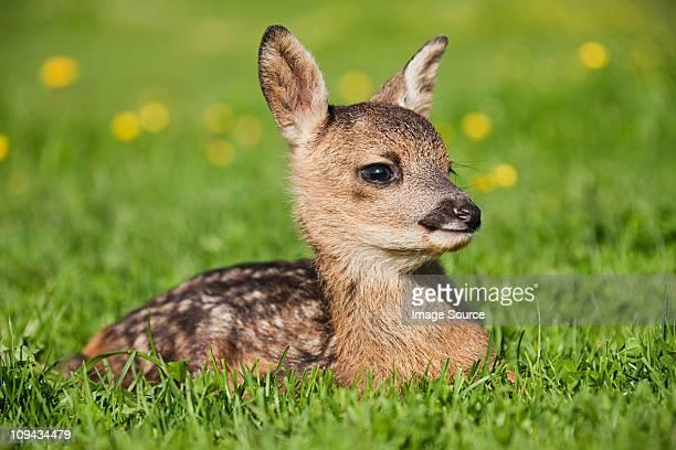 Cute fawn sitting on grass