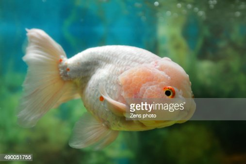 Cute Fish With Baby Face Stock Photo Getty Images