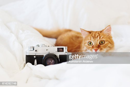 Cute ginger cat with old fashioned camera on white background. : Foto de stock