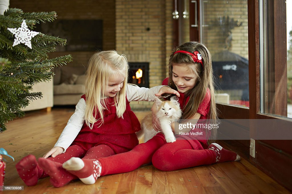 Cute girls playing with cat on christmas morning : Stock Photo