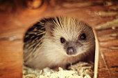 cute hedgehog baby
