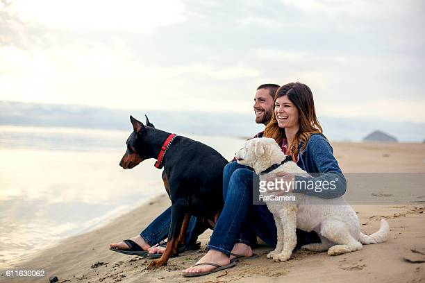 Cute heterosexual couple sitting on the sandy beach with dogs