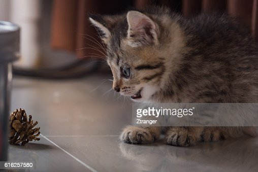 Cute kitten in christmas. : Foto de stock