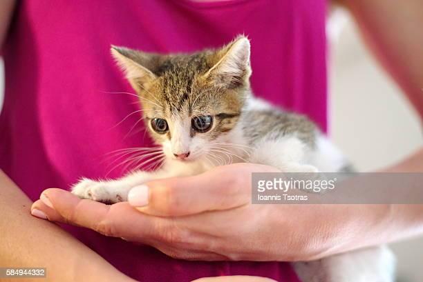 Cute Kitten in girl's hands
