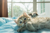Close up of cute kitten lying on petbed in the morning with sunlight.