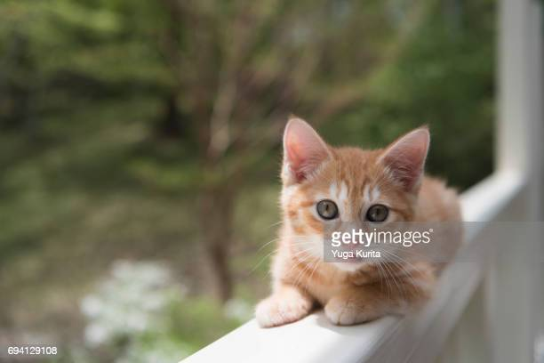 Cute Kitten on the Handrail